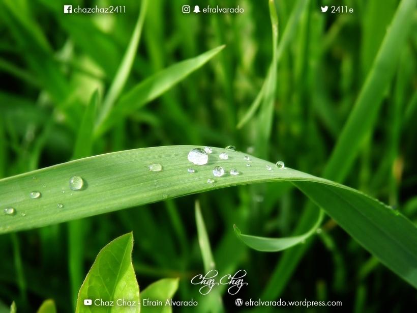 green-vista-171.jpg